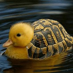Turtling Emoticon
