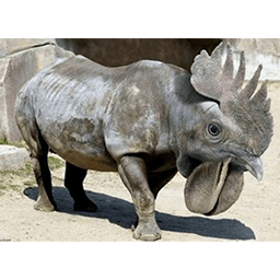 Rhinooster Emoticon