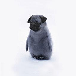 Puguin Emoticon