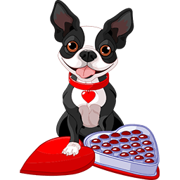 Chocolate Boston Terrier Emoticon