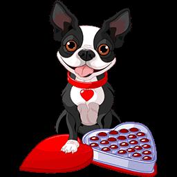 Chocolate Boston Terrier Emoticon